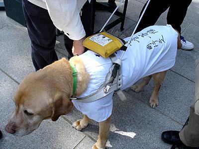 盲導犬コナンの巡礼姿