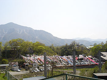 武甲温泉の鯉のぼり