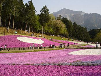 芝桜の丘から望む武甲山